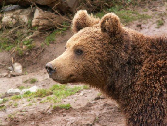 2 plazas de SVE en Croatia en refugio para osos