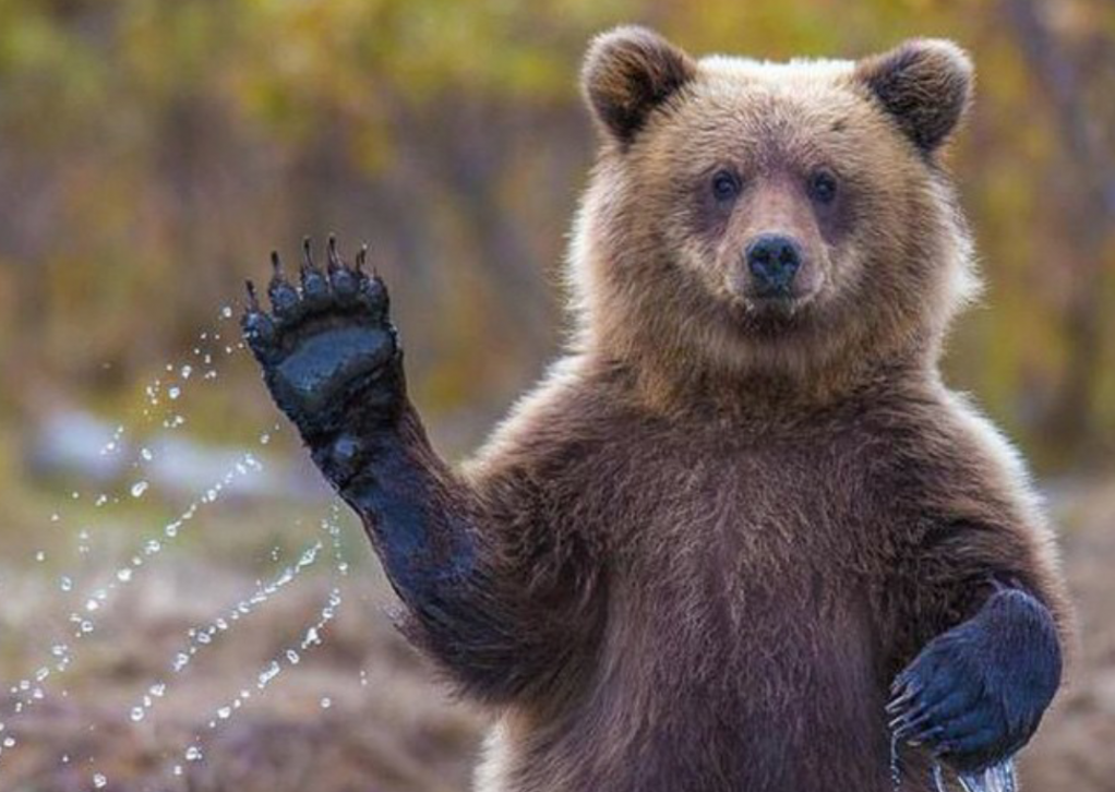 URGENTE! SVE para 7 meses en Rusia