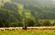 Voluntariado en una granja de Bélgica para 4 meses