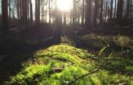 Voluntariado europeo sobre medio ambiente en parque regional de Lituania para una chica