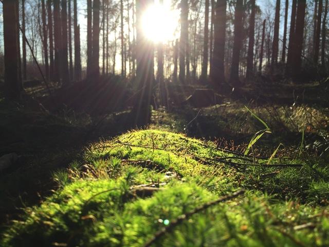 sve lituania medio ambiente