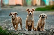 SVE en un centro de terapia con perros en Polonia