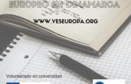 Becas Dinamarca para voluntariado en universidad
