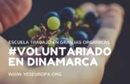 Trabajo en granjas orgánicas de Dinamarca (voluntariado europeo)