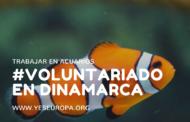 Voluntarios en acuarios en Dinamarca