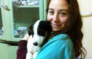 Voluntaria europea en Turquía como veterinaria