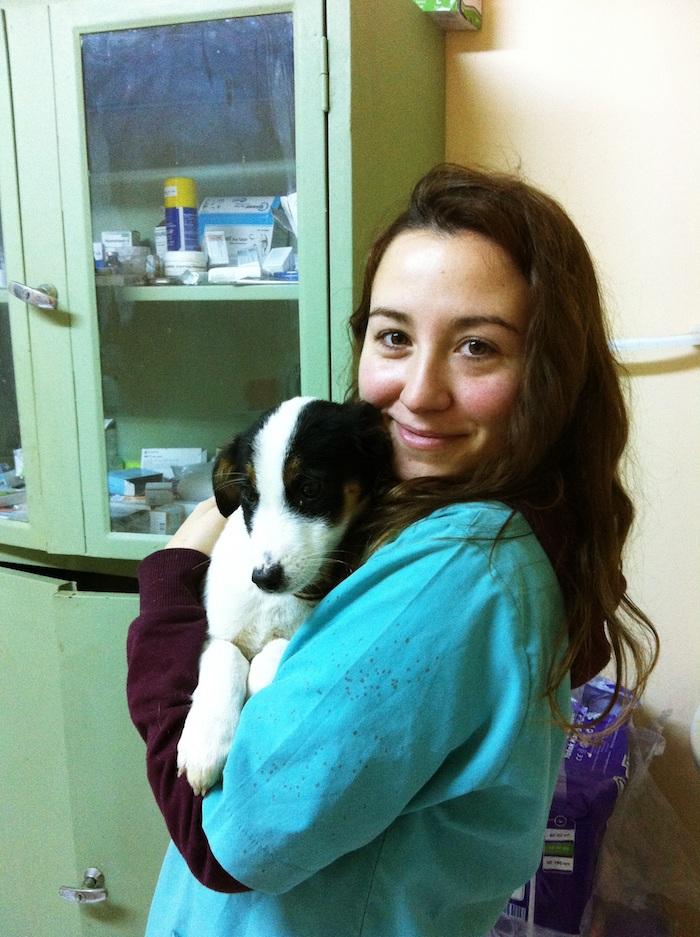 voluntariado europeo veterinarios