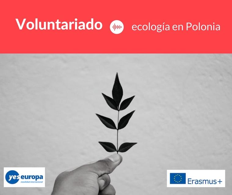 VOLUNTARIADO ecologia en polonia