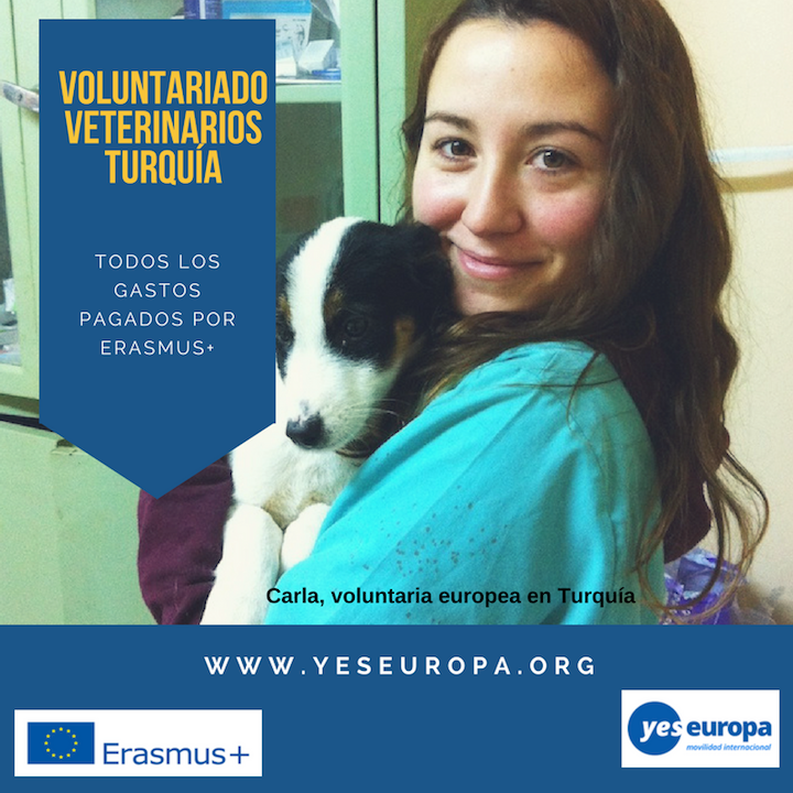 Se buscan veterinari@s para voluntariado protectora animales de Turquía