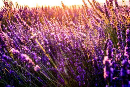 Plazas de voluntariado en Dinamarca en agricultura sostenible