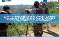 Voluntariado aves y recuperación fauna en Portugal
