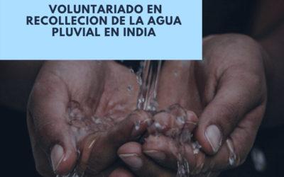 Voluntariado en India en proyectos con medio ambiente