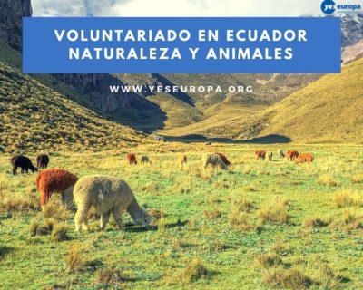 Voluntariado en Ecuador sobre naturaleza y animales