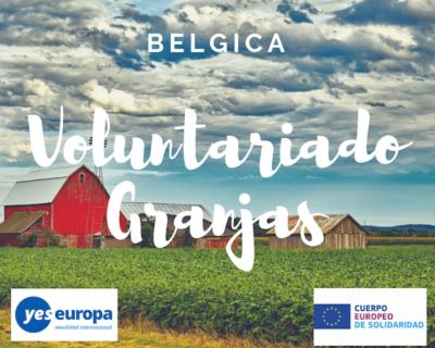 Voluntariado granjas biológicas en Bélgica