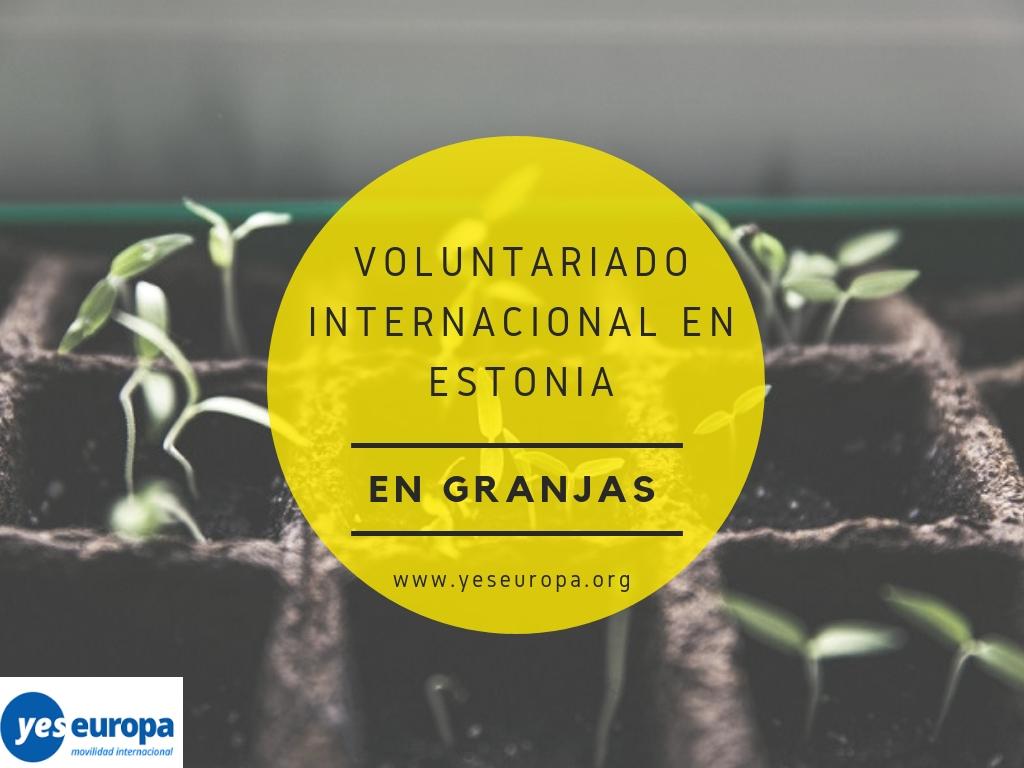 Voluntariado internacional en Estonia