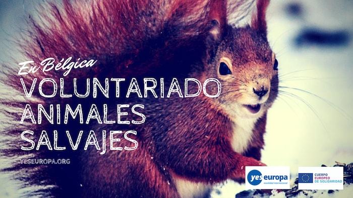 voluntariado animales salvajes