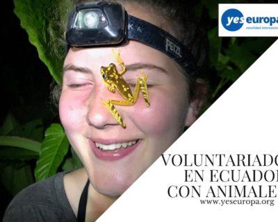Voluntariado en selva Ecuador sobre naturaleza y animales