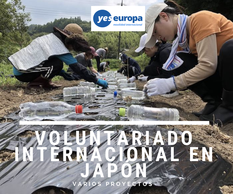 voluntariado en japon