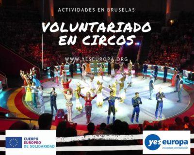 Voluntariado en circos Bélgica