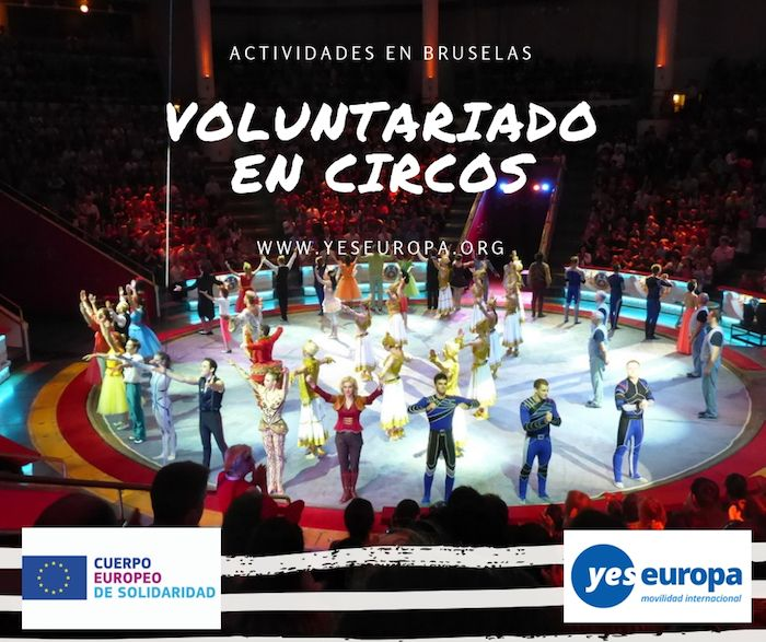 voluntariado en circos belgica
