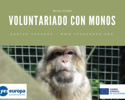 Voluntariado con monos en Reino Unido