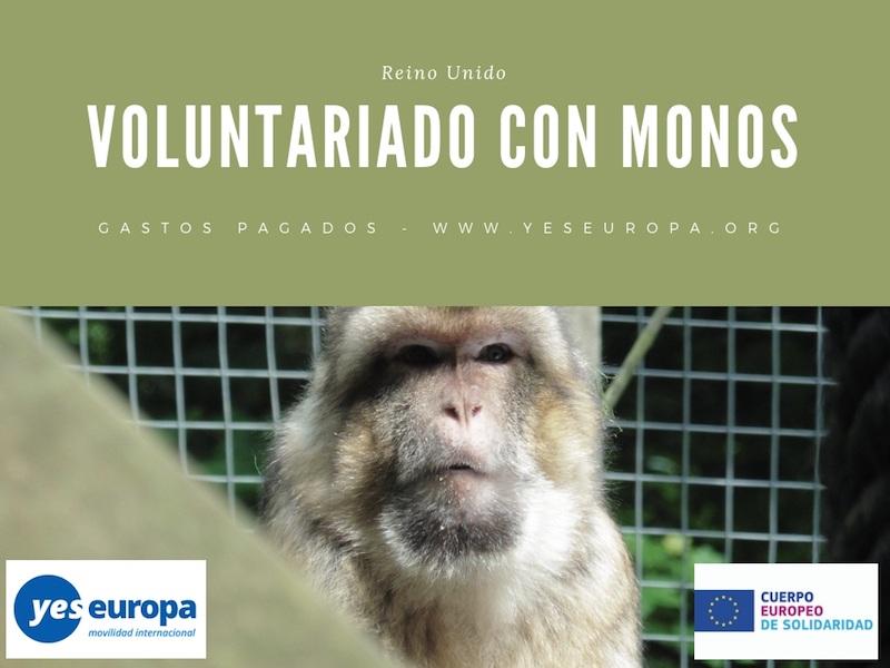 Voluntariado con monos