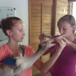 voluntariado en guatemala con animales
