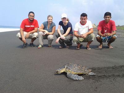 voluntariado en guatemala tortugasHawaii 1