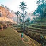 voluntariado indonesia selva