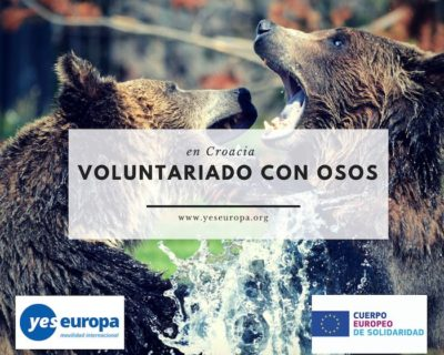 Voluntariado con osos en Croacia