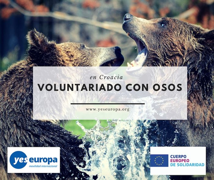 voluntariado con osos