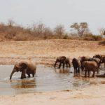 voluntariado kenya elefantes