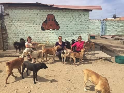 voluntariado peru trujillo animales
