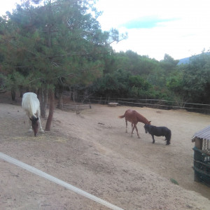 summer workcamps spain girona animals