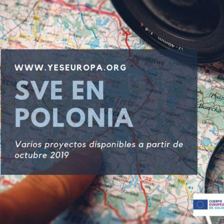 Hacer voluntariado remunerado en Polonia (varios proyectos)