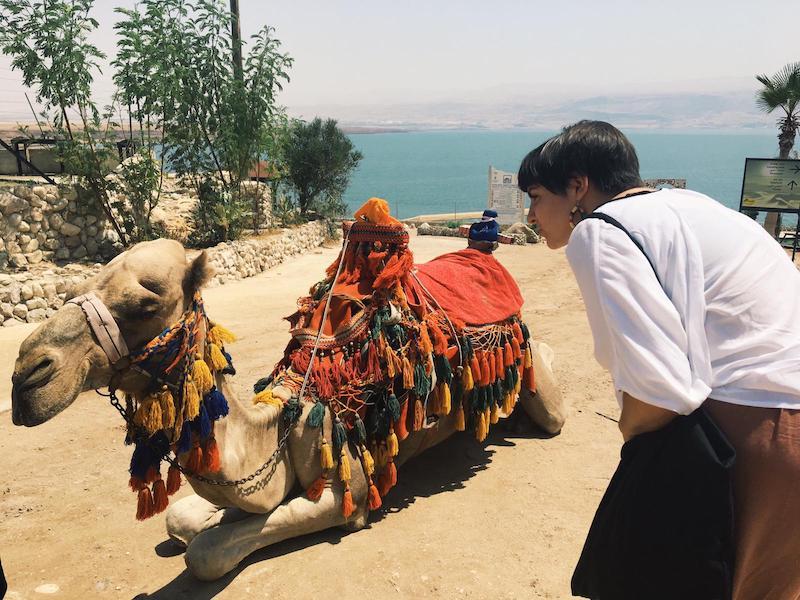 voluntariado en palestina hebron camello