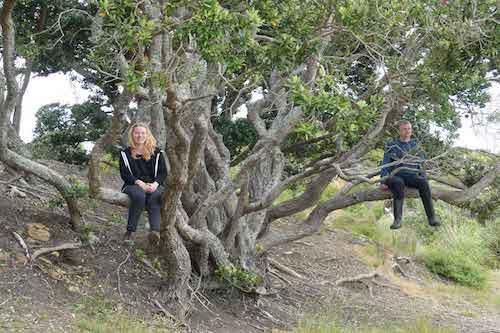 voluntariado nueva zelanda bosque sentados