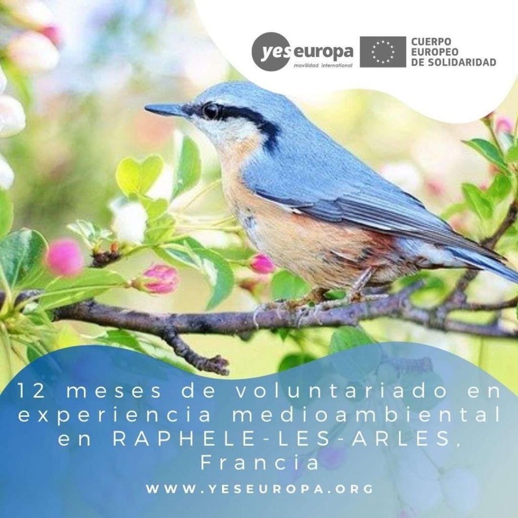 Redes voluntariado RAPHELE-LES-ARLES, Francia